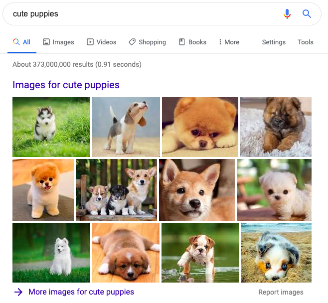 Image Pack Results For Cute Puppies